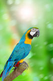 Parrot on green background Royalty Free Stock Photography