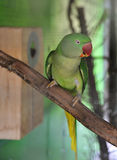 Parrot green Stock Image