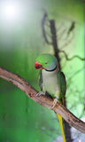 Parrot green Royalty Free Stock Images