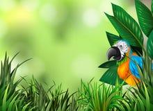 Parrot on the green nature background. Illustration vector illustration