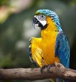 Parrot in green rainforest.