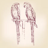 Parrot  hand drawn vector llustration sketch Stock Photo