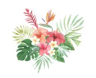 Bird of Paradise Watercolor Floral Flowers Leaves Plumeria Tropical Hibiscus. Parrot Hand Painted Watercolor tropical Plumeria and Hibiscus Florals. Elegant Stock Images