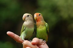 Parrot and hand pet. Parrot and hand in the parks Royalty Free Stock Images