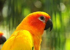 Parrot head Stock Image