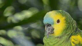 Parrot. stock video