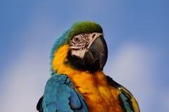 Parrot head. Portrait close up Stock Photos