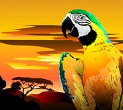 Parrot In Bright Colors. Vector Stock Photos