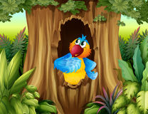A parrot inside a tree hollow Stock Photos