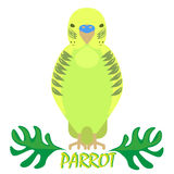 Parrot isolated front view on white. Green bird Stock Images