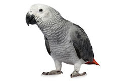 Parrot isolated on white Royalty Free Stock Photos
