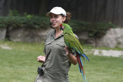Parrot and its tamer Stock Photography