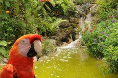Parrot in the jungle stock photo