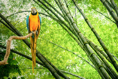 Parrot in the jungle Stock Image