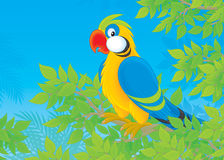 Parrot in jungle Stock Image
