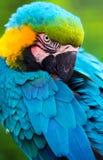 Parrot l'oiseau Photo stock