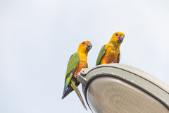 Parrot on lamps Royalty Free Stock Image
