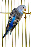 Parrot on a lattice cage Royalty Free Stock Photos