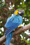 A parrot. Lay on the stick Royalty Free Stock Image