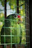 Parrot looking up stock images