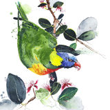 Parrot lorikeet colorful bird sitting on the branch Australian bird watercolor painting illustration isolated on white background. Parrot lorikeet colorful bird royalty free illustration