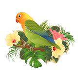 Parrot lovebird Agapornis tropical bird standing on a branch and hibiscus on a white background vintage vector illustration edita Royalty Free Stock Images