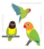 Parrot Lovebirds Cartoon Vector Illustration Stock Image