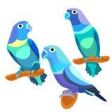 Parrot lovebirds couple sitting head turned blue. vector illustr Stock Photography