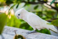 Parrot bird Royalty Free Stock Photos