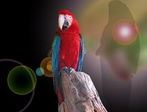 Parrot macaw. A black background. Zoo in Colombo. sri lanka, Ceylon Stock Photo