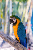 Parrot macaw beautiful color on tree Stock Photos