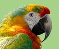 Parrot, Macaw, Bird, Nature, Wild Stock Images