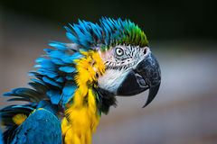 Parrot Macaw closeup Stock Photos