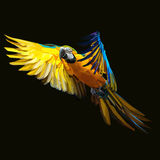 Parrot macaw Stock Images