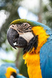 Parrot macaw Stock Photos
