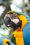 Parrot macaw Stock Photos