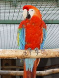 Parrot macaw Serie. Parrot macaw on a tree Stock Image