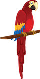 Parrot or Macaw Stock Photo
