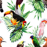 Parrot maccaw and toucan on branch Royalty Free Stock Photos