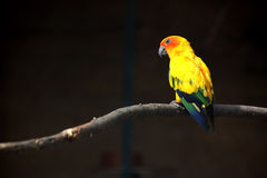 Parrot. With many colors relaxing Stock Image