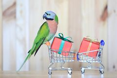 Parrot on model miniature shopping cart and colorful gift box for christmas and happy new year on wooder background royalty free stock photos