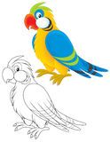 Parrot. Motley parrot, color and black-and-white outline illustrations on a white background royalty free illustration