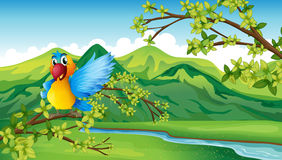 A parrot near the river Stock Photography
