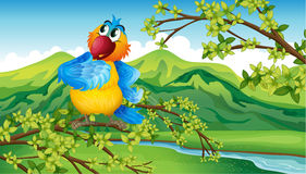 A parrot near the riverbank Royalty Free Stock Photo