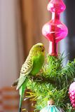 Parrot on a New Year tree stock photos
