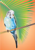 Parrot on a palm branch. Stock Photos