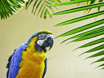Parrot with palm leaves Royalty Free Stock Photo