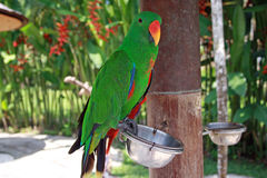 Parrot in the park. Parrot in bird's park in Bali Stock Photos