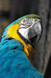 Parrot. Parot in zoo in Prague Royalty Free Stock Photos