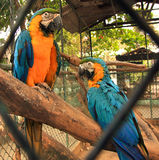 PARROT. S, also known as psittacines are birds of the roughly 372 species in 86 genera that make up the order Psittaciformes,[4] found in most tropical and Stock Photos
